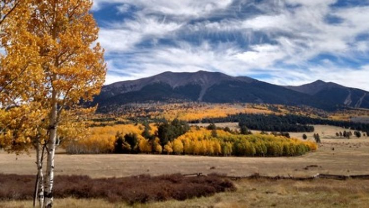 GFFP Awarded WFHF Grant – Forest Treatments Planned for Hart Prairie/San Francisco Peaks • Highway 180 Corridor