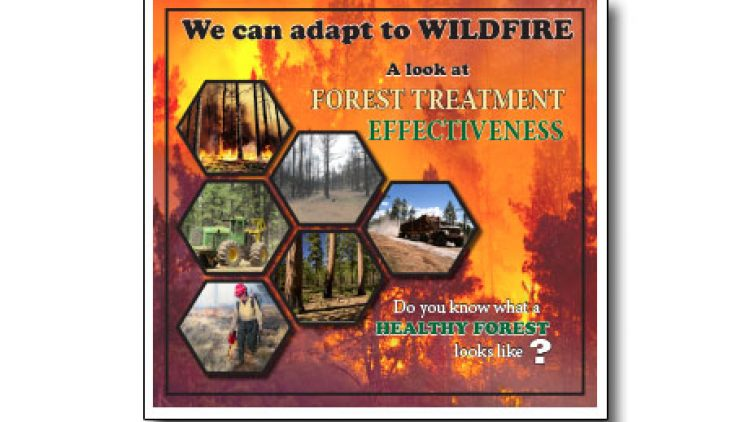 A Look at Forest Treatment (thinning trees/prescribed fire) Effectiveness